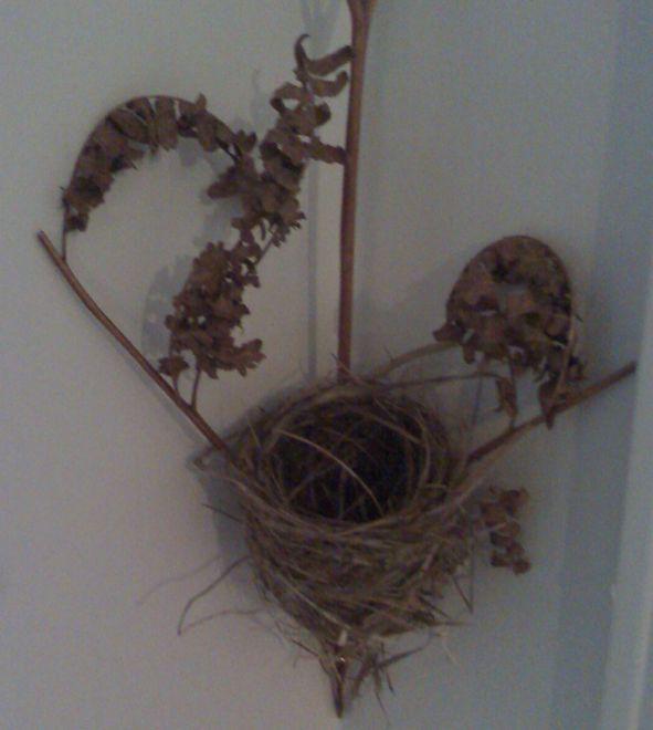Kolibri Nest im Farn