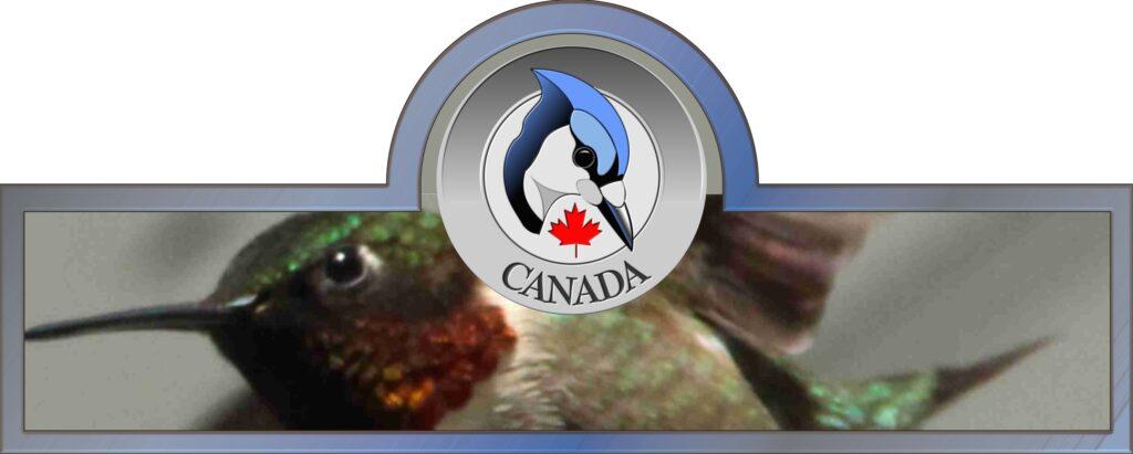 Kolibris in Kanada